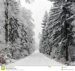 Snowy Road Through Winter Forest, Czech Republic Royalty Free Stock 584