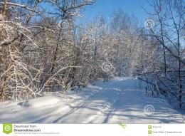 The Road Through The ForestWinter Royalty Free Stock PhotoImage 1351
