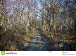 Woods Stock PhotoImage: 66350659 1382
