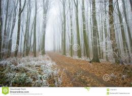 Road Through A Beautiful Frozen Forest In Winter Stock Photography 487