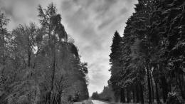 Shiny asphalt road through forest winter:Gray 981