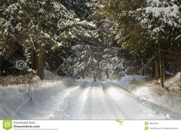 Road Covered In Snow Through A Winter Forest Stock PhotoImage 1280
