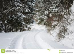 Road Covered In Snow Through A Winter Forest Stock PhotoImage 508