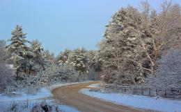 Download Winter road through the forest High quality wallpaper 1038