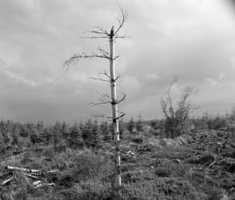 The Withered Tree | Nelius Flynn: Photographs 247