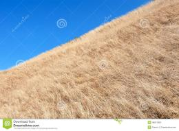 The Withered Grass Stock PhotoImage: 49611604 1828