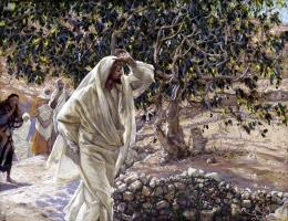 How Did Jesus Made the Fig Tree Wither? « Bible Study Outlines 593