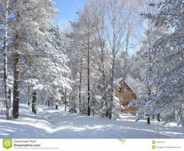 Wooden cottage hidden in the forest between the snow covered pine 558
