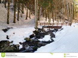 Free Stock Photography: Wooden bridge in the natural reserve in winter 1483