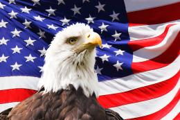 Bald Eagle And A Flag Free Stock Photo HDPublic Domain Pictures 1442