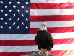Bold Eagle and American Flag by Chowen2001 on DeviantArt 405