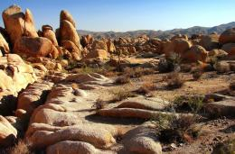 PanoramioPhoto of Arch Rock Nature Trail,Joshua Tree NPC 566