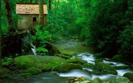 download beautiful old forest mill wallpaper tags nature mills forests 831