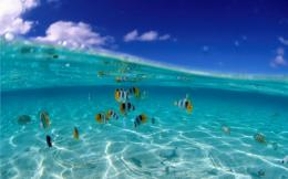 Beautiful Beach Tropical Fish Wallpapers #13207359784 1973