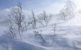 Snowstorm Desktop wallpapers 1440x900 733