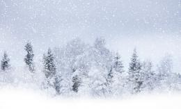 Wallpaper Winter, snow, tree, blizzard, snowstorm desktop wallpaper 1590