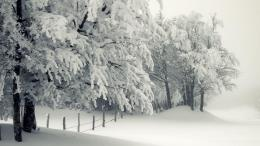 Blizzard winter wallpaper 1548
