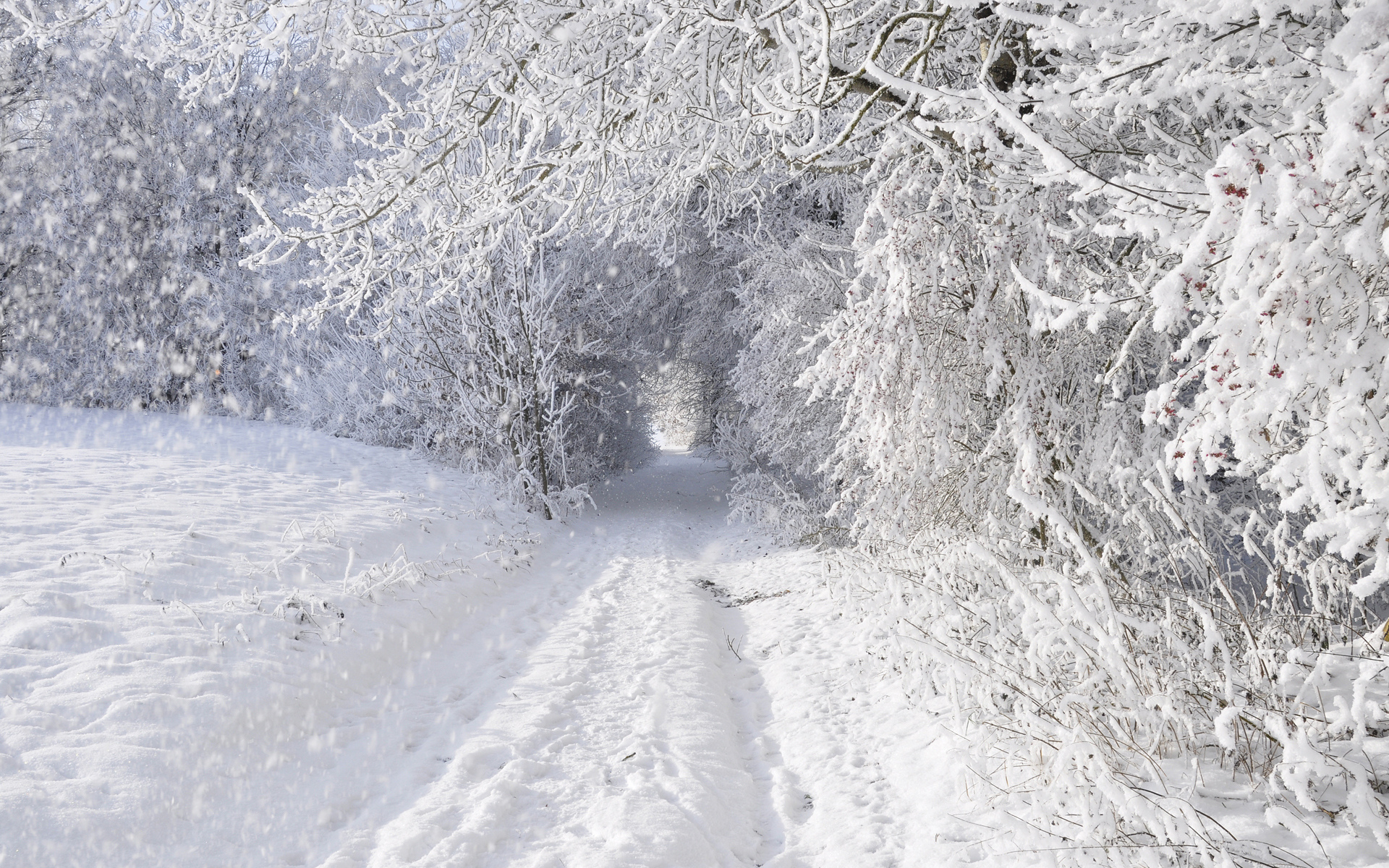 nature landscapes winter snow snowing snowflake snowfall roads trees 1089