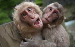 two monkeys hug with green and brown background high definition 551