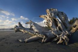 Driftwood on a beach | Washed Ashore | Pinterest 1920