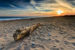"Driftwood at Moonstone Beach""A fine art photograph of a washed up 178"
