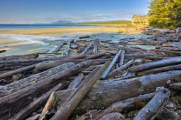 Wickaninnish Beach Driftwood Picture | Photo, Information 1548