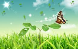 picture big natural scenery wallpaper butterfly and green plants jpg 817
