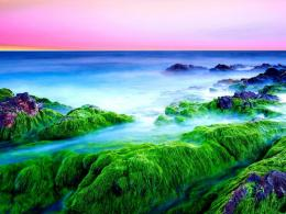 Green seashore at dawn wallpaper 1029
