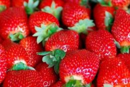 fresh strawberries healthier option than dried strawberries | DrSara 648
