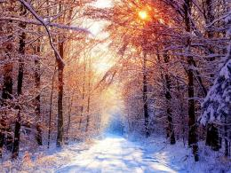 Download Sunlight over the snow tree wallpaper in Nature wallpapers 375