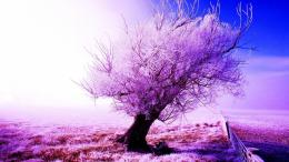 Frosty tree in winter wallpaper 1373