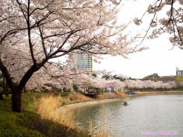 Lake 석촌호수 on 2 consecutive days because the weather was gloomy 1676