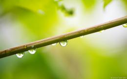 Raindrops | Photography Blog by GT 1065