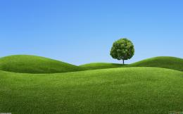Lonly tree on green hills wallpaper #8362Open Walls 754