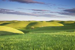 Green Hills California HD Wallpaper #18183 Wallpaper | WallpapersTube 1981