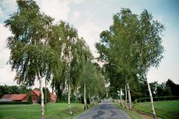 File:Rothertshausen Birch Avenue 1 jpgWikimedia Commons 1652