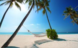 , sunny, beach, sand, palm, tree, ocean, hammock, nature wallpapers 1200