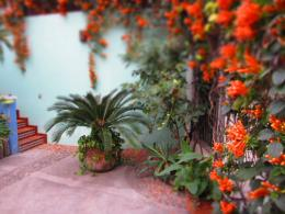 house to have a look at an amazing cascade of bright orange flowers 203