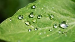 Raindrops on a leaf wallpaper918923 1240