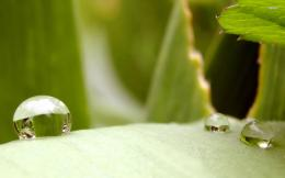 related with raindrops on green leaf and ladybug x hd wallpaper 623