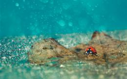 ladybug, leaf, bubbles, water, rain, drops, natural, photoshoot 899