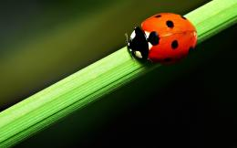 Ladybug cartoon insects animals wallpapers 1680x1050 1333