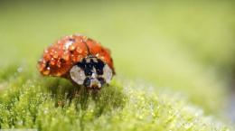 Ladybug super macro raindrops spring leaf wallpaper 1312