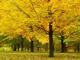 All Wall i Love: Autumn#1 [Maple Trees ] 803