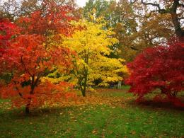 PanoramioPhoto of Maple trees and others in their autumn colours 755