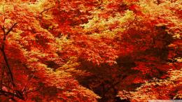 autumn maple tree Quotes 202