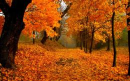 autumn foliage, forest, path, maple tree, maple leafs, orange world 1113