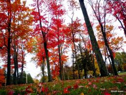 PanoramioPhoto of Autumn: Forest of maple tree 1761