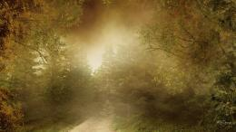 misty autumn morning jpg 1191