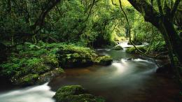 the jungle wallpaper river in the jungle wallpaper download river in 738